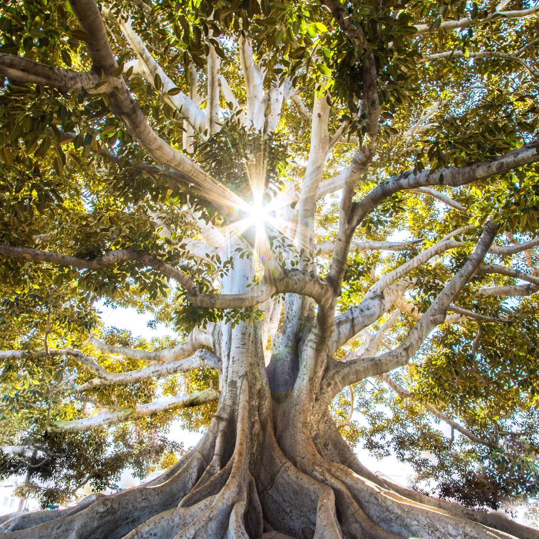 Aminosäuren – Grundbausteine des Lebens